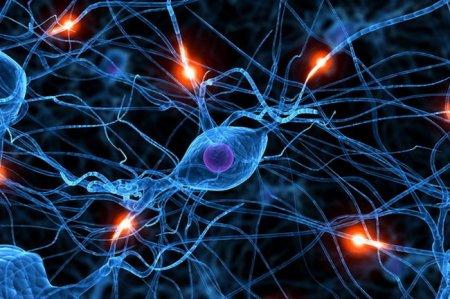 Ученые: Бег меняет структуру мозга